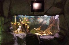 Посетители океанариума на Батарейной: «Нам демонстрируют мертвых рыб»