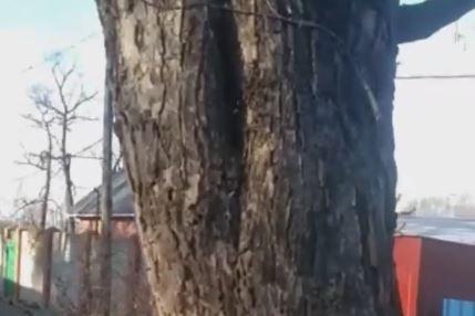 В пригороде Владивостока заметили то, чего не должно быть зимой