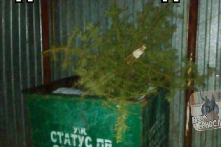 Не дождавшись Нового года, житель Приморья выкинул елку в мусорный бак