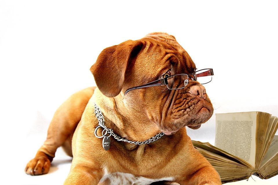 Тест PRIMPRESS: какая же вы собака?