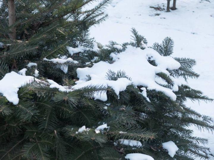 Вечером 13декабря воВладивостоке реален снегопад