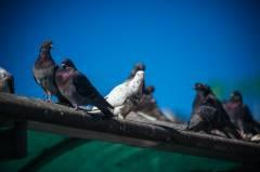 Фото: Илья Евстигнеев   Птиц в приморских зоопарках не нужно убивать