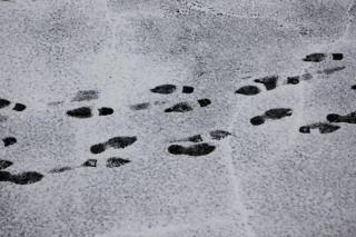 Фото: Илья Евстигнеев   Тест PRIMPRESS: падал прошлогодний снег