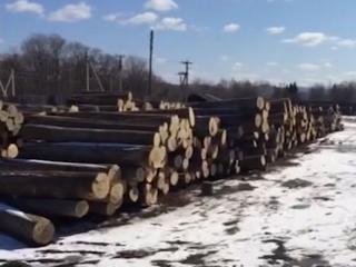 Ущерб на шесть миллионов рублей причинили «черные лесорубы» в Приморье