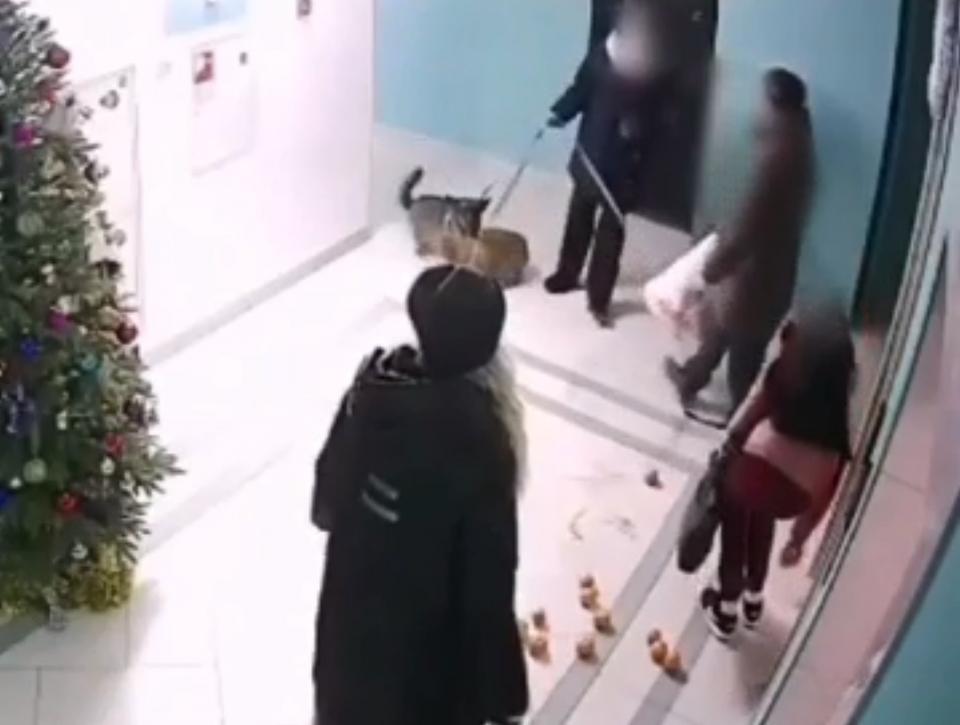 «Видео  – жесть»: во Владивостоке мужчина запинал собак и их хозяйку