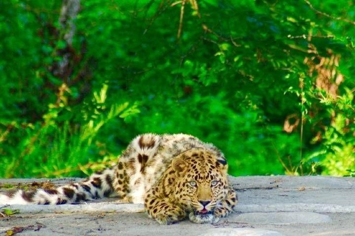 Интернет для носорогов, нейросеть для леопардов, камеры для аистов