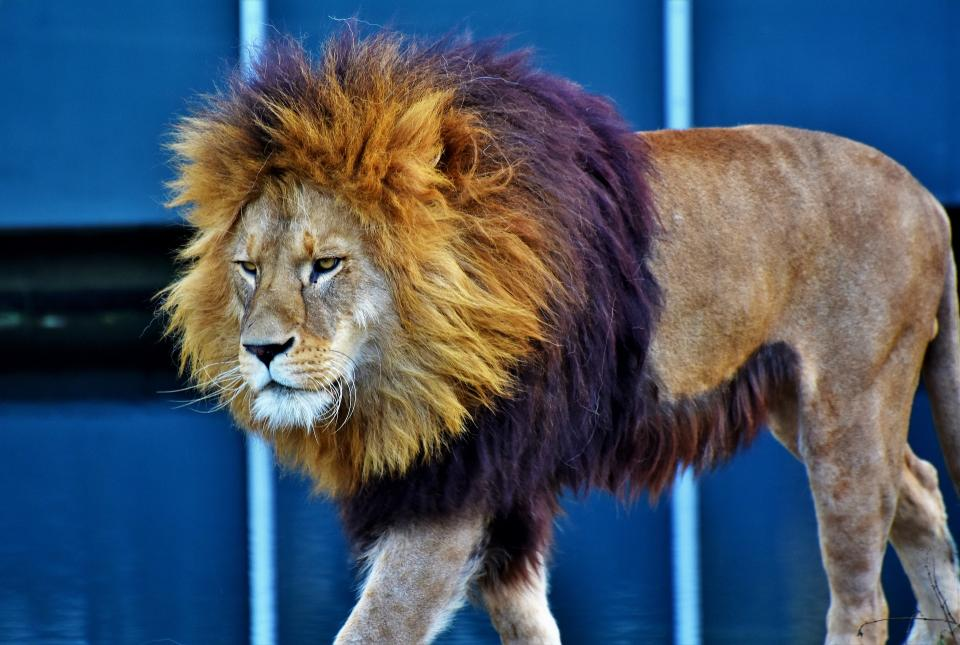 Генпрокуратура узнала овтором нападении хищника наребенка вуссурийском зоопарке