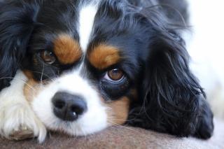 Фото: pixabay.com | 5 распространенных ошибок неопытных владельцев собак