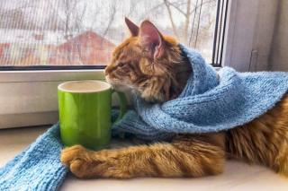 Фото: iStock   Эксперты рассказали, как правильно поить кошек