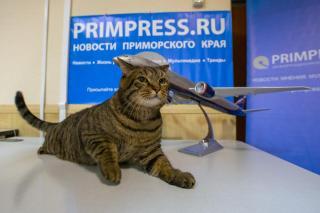 Фото: Татьяна Меель / PRIMPRESS | Знаменитый владивостокский кот Виктор получит премию на выставке «Кэтсбург» в Москве