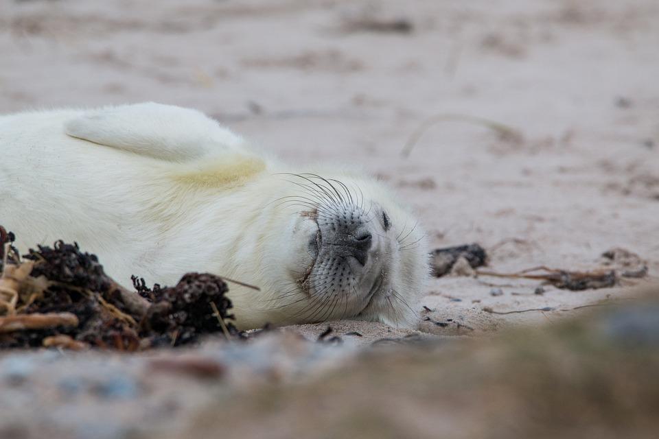 10 фактов о морских млекопитающих Приморья