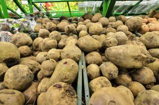Фото: Александр Потоцкий / PRIMPRESS | Медики рассказали о пользе картофеля