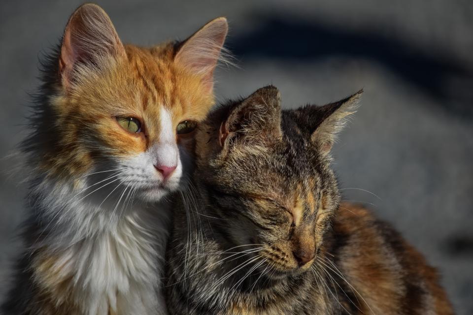 Кошачий концлагерь создала жительница Приморья у себя дома