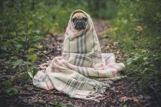 Фото: pixabay.com | Топ-10 пород собак, которые не любят детей