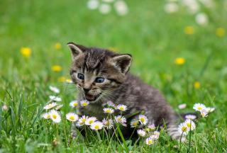 Фото: pixabay.com | Тест PRIMPRESS: что вы знаете о котиках?