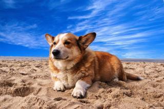 Фото: pixabay.com   В Сети появилось предупреждение для владельцев собак