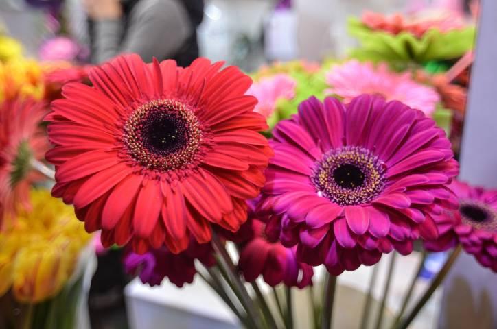 Дорогой праздник: в преддверии 8 Марта во Владивостоке подорожали цветы