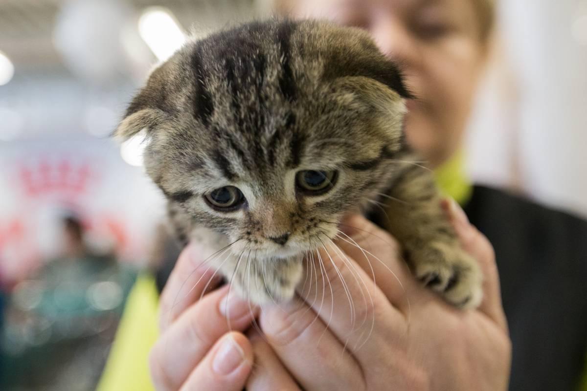 В честь Дня святого Патрика во Владивостоке состоялась выставка кошек