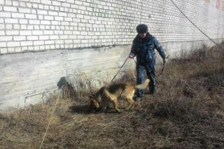 Пять мобильных телефонов обнаружила служебная собака в исправительном учреждении Приморья