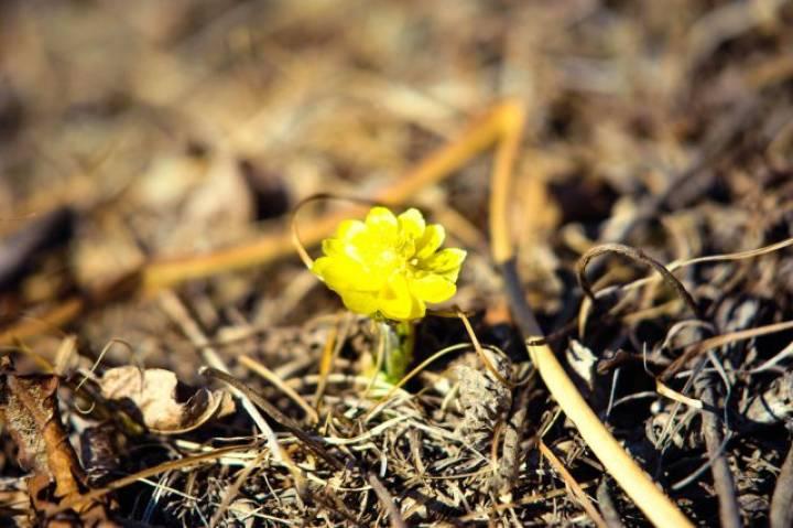 Во Владивосток официально пришла весна