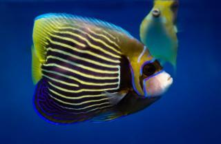 Тропические рыбы из Манилы пополнили коллекцию Приморского океанариума
