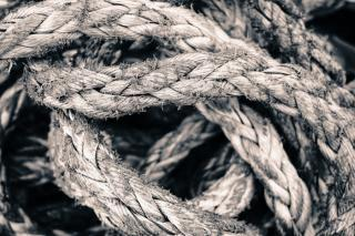 Фото: pixabay.com | «Запутался в веревках»: новый вид животного обнаружили в Приморье