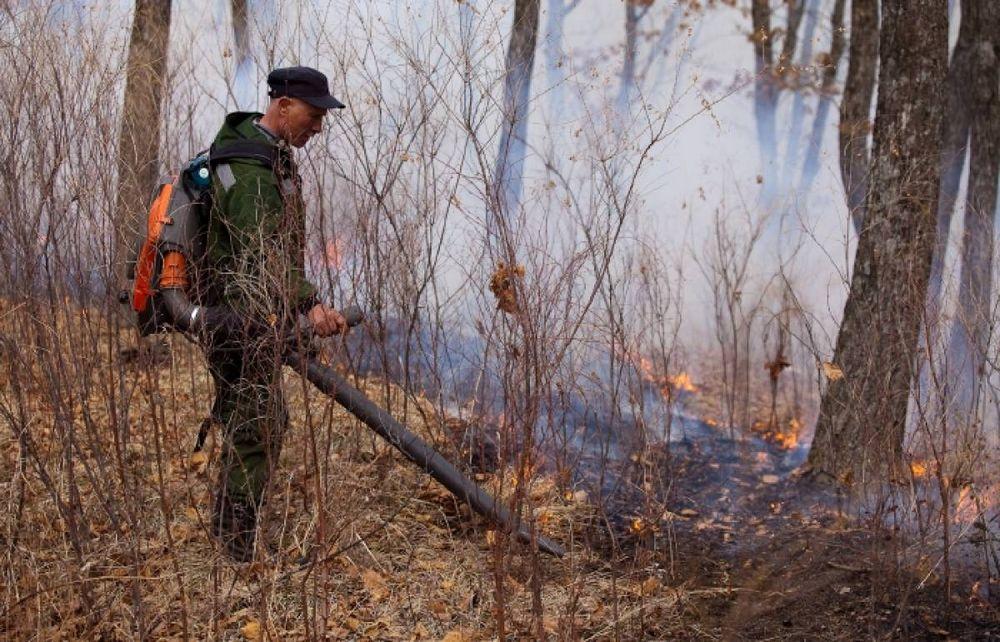 Специалисты поджигают приморские леса, чтобы предотвратить пожары
