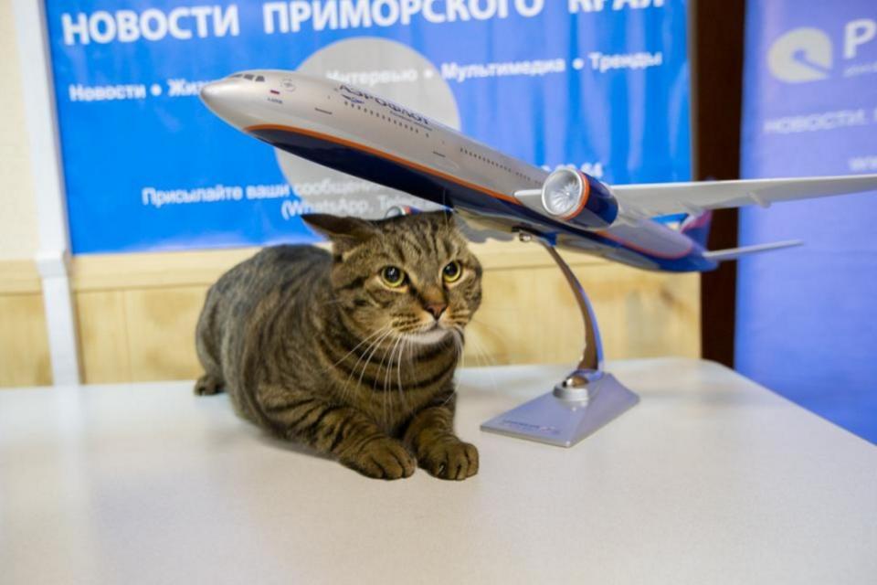 Толстого кота Виктора из Владивостока показали на федеральном канале