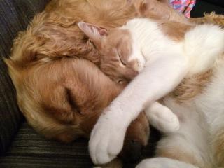 Фото: pixabay.com | Топ-5 доказательств, что животное в доме сделает вашу жизнь лучше