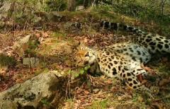 На границе Китая с Приморьем тигры обзавелись потомством