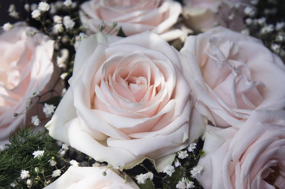 Покупка роз маме на день рождения аукнулась жительнице Владивостока