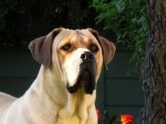Во Владивостоке собаки погрызли машину