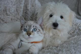 Фото: pixabay.com   Всех, у кого есть домашние животные, ждет изменение. Путин подписал закон