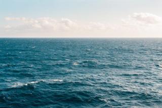 Фото: pixabay.com | Опасные морские хищники подплыли очень близко к Владивостоку