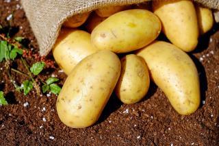 Фото: pixabay.com   Лунный календарь указал идеальные дни для посадки картошки
