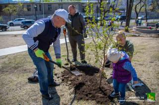 Фото: Анастасия Котлярова / vlc.ru | Высадка новых деревьев и кустарников прошла в Покровском парке и в сквере Надибаидзе