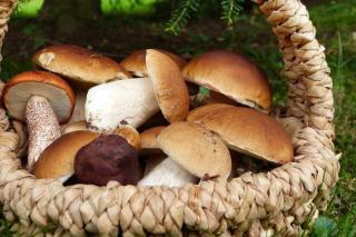 Фото: pixabay.com   Минприроды прокомментировало сведения об ужесточении правил сбора грибов, ягод и березового сока