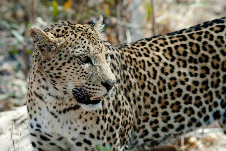 «Красивый какой»: в Приморье хищник вышел к людям