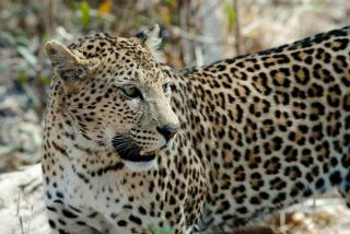 Фото: pixabay.com   «Красивый какой»: в Приморье хищник вышел к людям