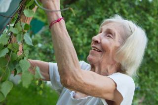 Фото: pixabay.com   С 1 июля еще одна категория пенсионеров получит право на индексацию пенсий
