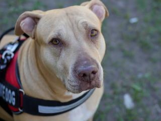 Фото: pixabay.com   Во Владивостоке служебный пес помог найти пропавшего ребенка и спасти ему жизнь
