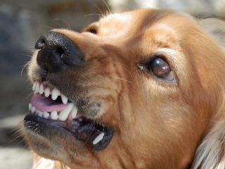 Фото: pixabay.com | «Будто стая шакалов»: жительница Приморья серьезно пострадала от стаи собак