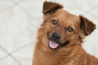 Фото: pixabay.com | Ученые установили, что животные могут смеяться, как люди