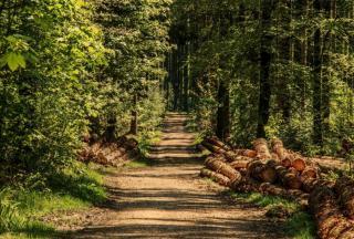 Фото: pixabay.com | «Зачем она его гладит?»: жительница Приморья сняла «жуткую» встречу в лесу