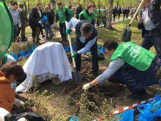 Фото: Сбербанк | Более полутысячи деревьев высадили в Артеме клиенты Сбербанка