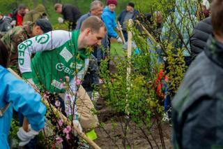 Фото: Cбер   Более тысячи деревьев высадили во Владивостоке клиенты Сбербанка