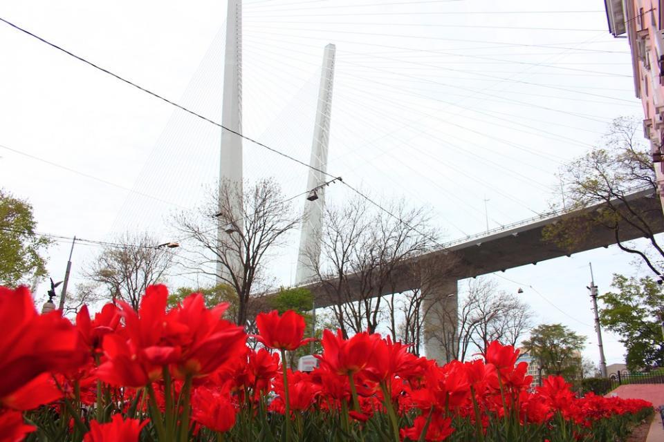 Город в цветах: вестники лета распускаются во Владивостоке
