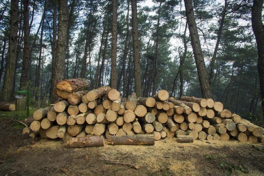 Какое будущее у экспорта лесной промышленности, расскажут на форуме «Экспортный потенциал Приморья»