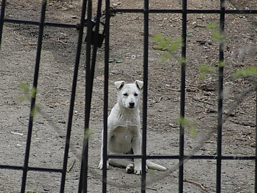 Приморские депутаты озабочены проблемой бездомных животных