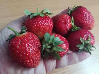 Фото: PRIMPRESS | Раскрыт секрет опытных дачников, выращивающих самую сладкую клубнику